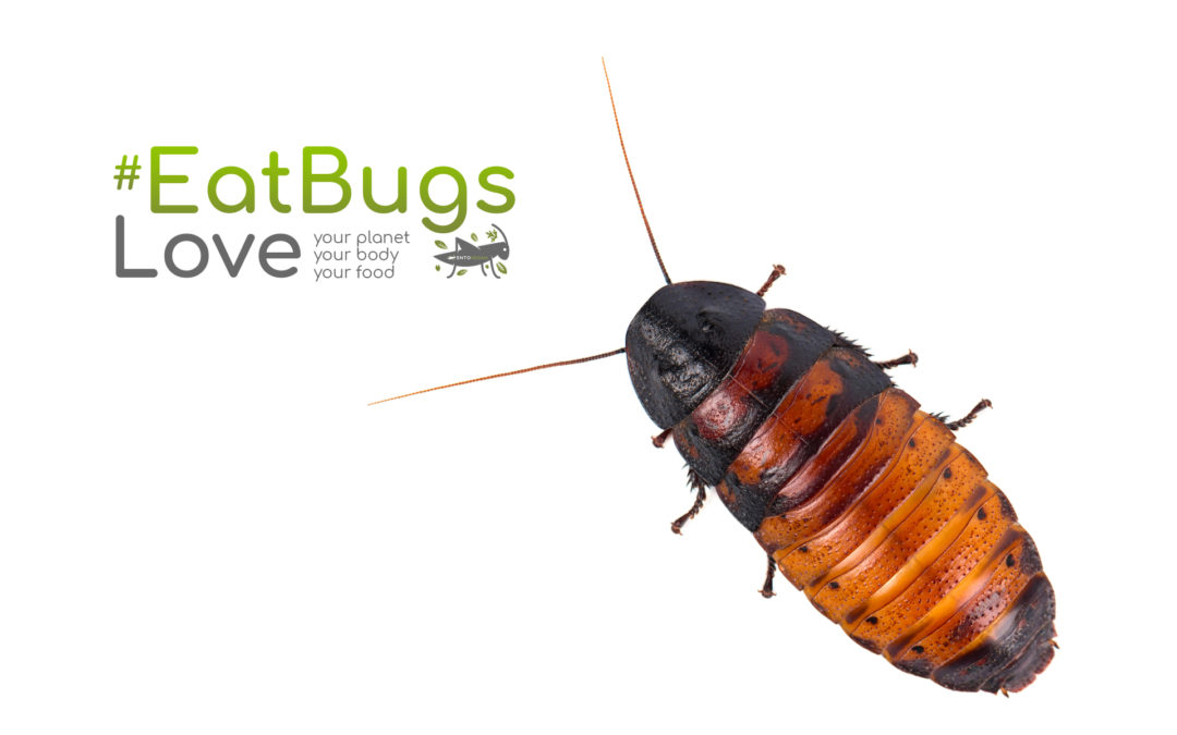 The beautiful incredible nutritious cockroach - Entovegan